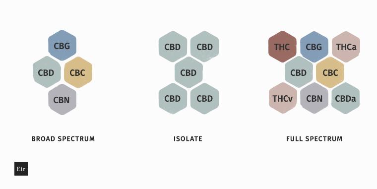 Różnica pomiędzy full spectrum CBD, broad spectrum oraz izolatem