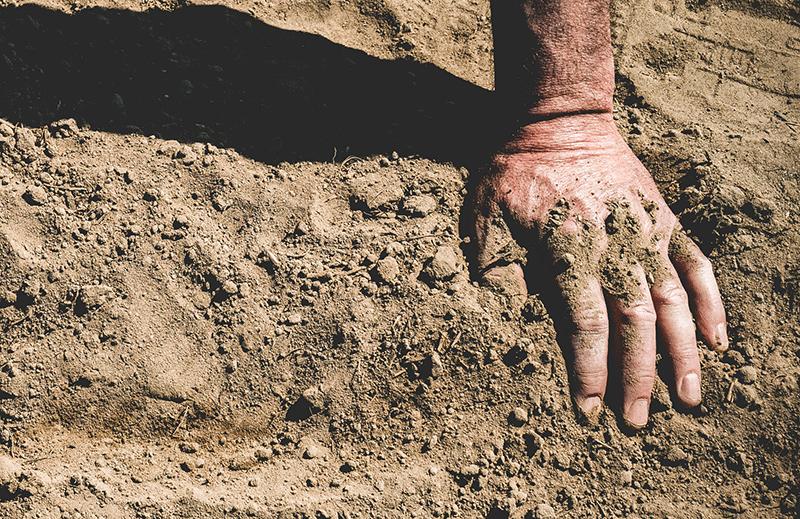 uprawa konopi - gleba